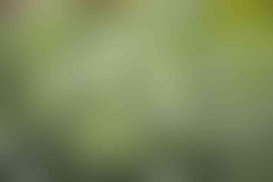 листовая-зелень-в-саду-0168