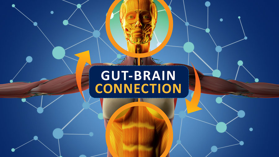 gut-health-the-science-behind-your-second-brain