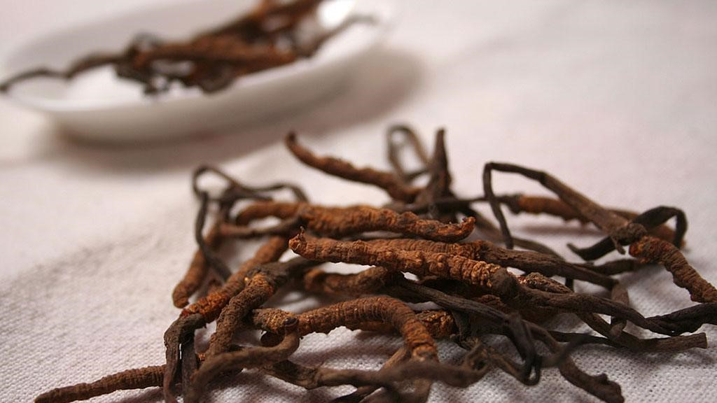 cordyceps-uses-and-benefits-you-need-to-know
